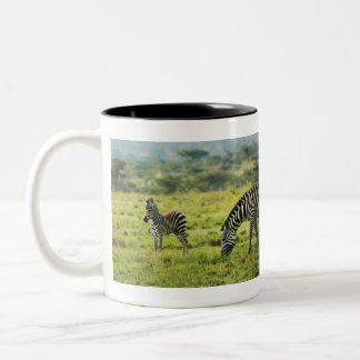 Baby zebra calendars Two-Tone coffee mug