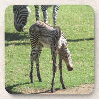 Baby Zebra Coasters