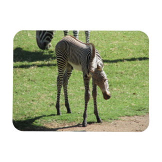 Baby Zebra Flexible Magnet