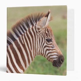 Baby zebra head, Tanzania Binder