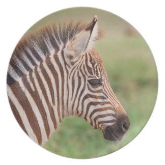 Baby zebra head, Tanzania Plate