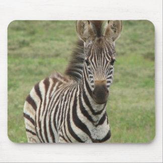 Baby Zebra Mouse Pad