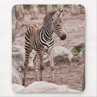 Baby zebra mousepads