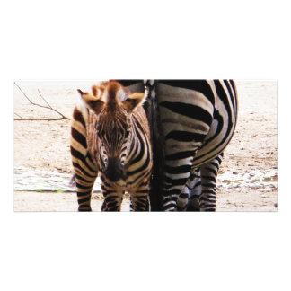 Baby Zebra Photo Card