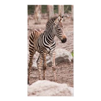 Baby zebra photo card template
