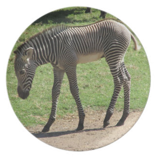 Baby Zebra Plate