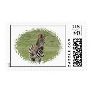 Baby Zebra Postage Stamp