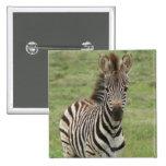 Baby Zebra Square Pin