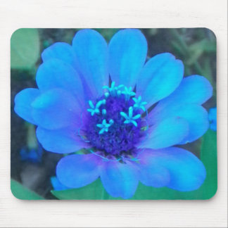 Baby Zinnia in Blue Mousepad