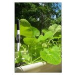 Baby zucchini plants in the front porch garden Dry-Erase board