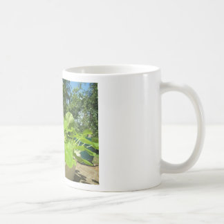 Baby zucchini plants in the front porch garden classic white coffee mug
