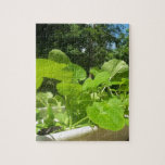 Baby zucchini plants in the front porch garden jigsaw puzzle