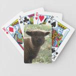 Babydoll Southdown Lamb Poker Cards
