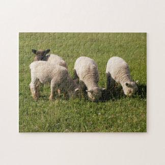 Babydoll Southdown Lambs Puzzles