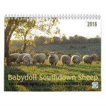 Babydoll Southdown Sheep 2016 NABSSAR Calendar