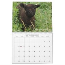 Babydoll Southdown Sheep 2017 NABSSAR Calendar