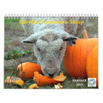 Babydoll Southdown Sheep 2019 NABSSAR Calendar