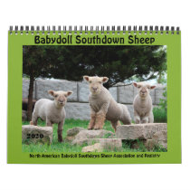 Babydoll Southdown Sheep 2020 NABSSAR Calendar