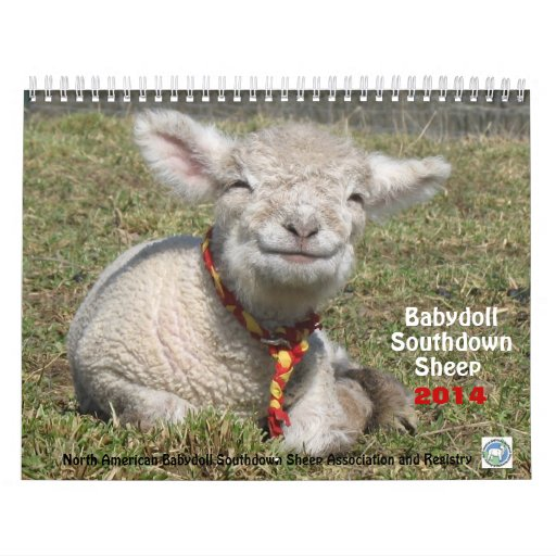 Babydoll Southdown Sheep NABSSAR 2014 Calendar