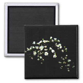babys breath white flowers against black magnet