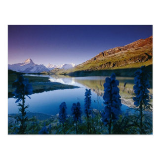 Bachalpsee in the morning postcard