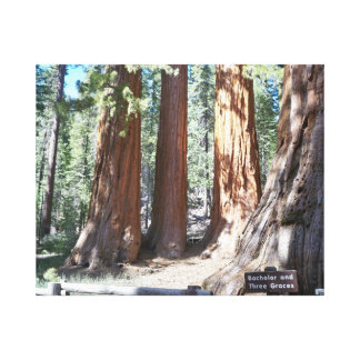 Bachelor and Three Graces at Yosemite Wrapped Canv Canvas Print