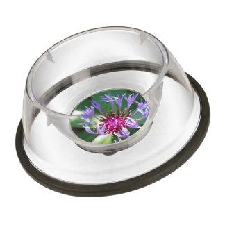 bachelor-button-11 pet bowl