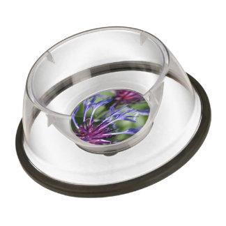 bachelor-button-1 pet bowl