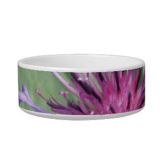 Bachelor Button Flower Blossom Pet Bowl Cat Water Bowls