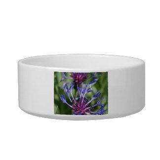 Bachelor Button Flowers Pet Bowl Cat Water Bowl