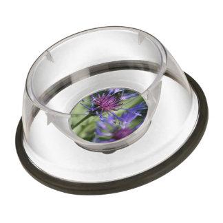 Bachelor Button Flowers Pet Bowl
