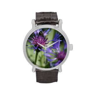 Bachelor Button Plant Watches