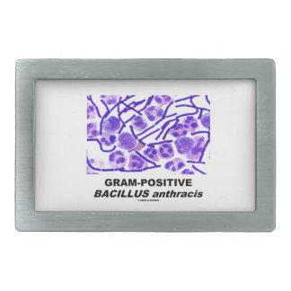 Bacilo anthracis grampositivo (bacterias) hebilla cinturon rectangular
