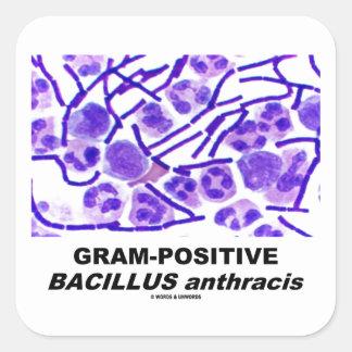 Bacilo anthracis grampositivo (bacterias) pegatina cuadrada