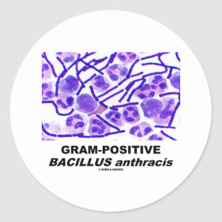 Bacilo anthracis grampositivo (bacterias) pegatina redonda