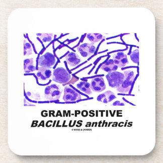 Bacilo anthracis grampositivo (bacterias) posavasos