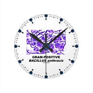 Bacilo anthracis grampositivo (bacterias) reloj