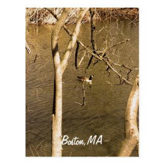 Back Bay Fens Wildlife Postcard