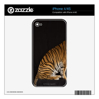 Back end of tiger sitting on platform decal for iPhone 4S