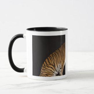 Back end of tiger sitting on platform mug