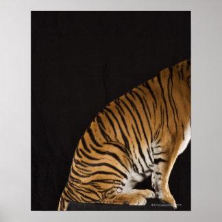 Back end of tiger sitting on platform poster