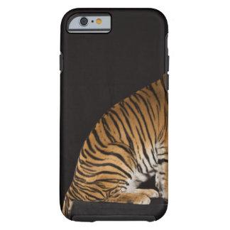 Back end of tiger sitting on platform tough iPhone 6 case