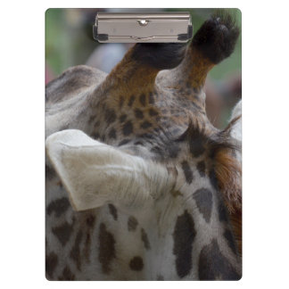 back of giraffe head animal image clipboard