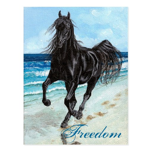 Back Stallion Arabian horse Freedom postcard
