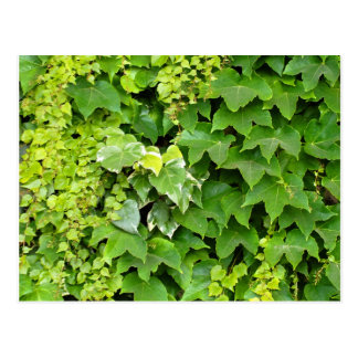 Background of Japanese creeper Postcard