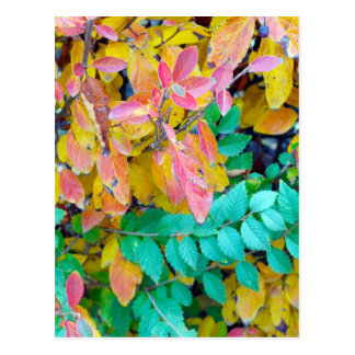Background of vivid red and green autumn bush leav postcard