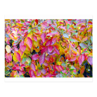 Background of vivid red and yellow autumn leaves postcard