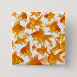 Background Showing a Large Group of Goldfish Button