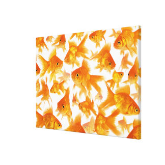 Background Showing a Large Group of Goldfish Stretched Canvas Prints