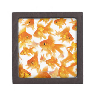 Background Showing a Large Group of Goldfish Jewelry Box